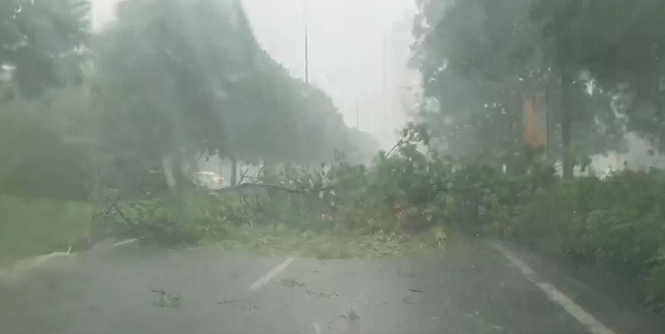 Maltempo, violenta grandinata in città, il vento sradica un grosso ramo. Bloccata via Malta VIDEO