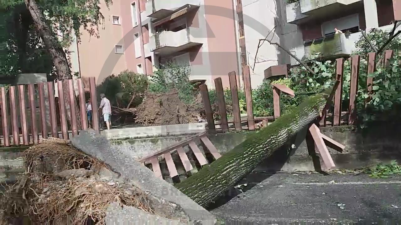 """Maltempo, conta dei danni a Brescia nord. Il """"camera car"""" del Gruppo Cinofili Leonessa"""