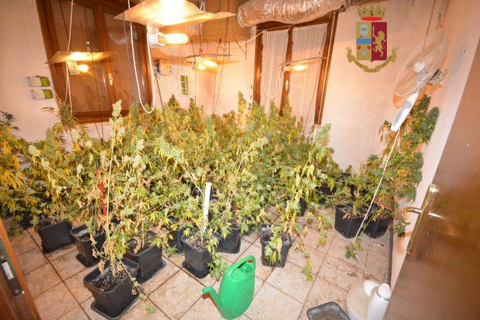 serra-marijuana-spaccio