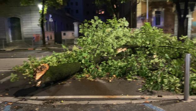 Maltempo, ramo ostruisce la strada in via XX Settembre